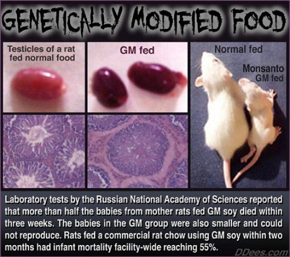 Genetically Modified Food!!!